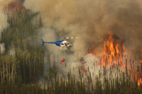 forest fire suppression - fire weed helicopters